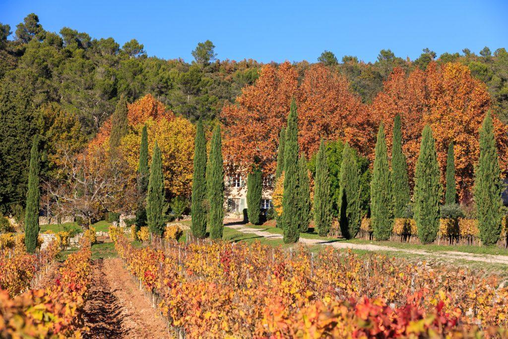 Huile d'olive Provence bio produite au Château La Calisse
