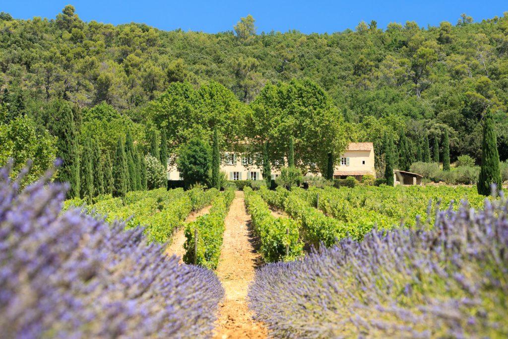 Château La Calisse propose vente directe vin de Provence