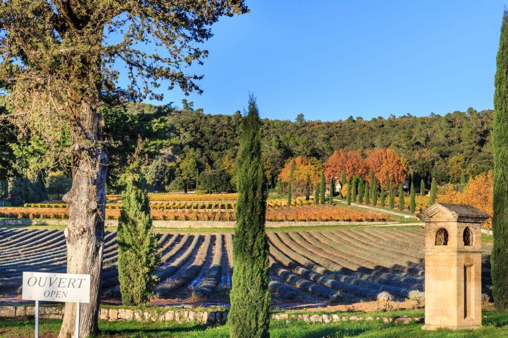 Provence wine gift box