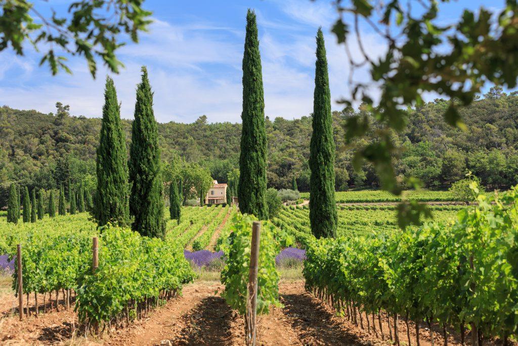 Provence wine direct sale at Château La Calisse