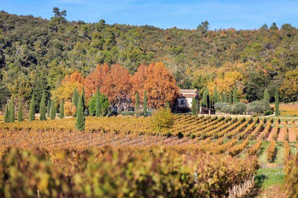 Vin blanc bio Provence