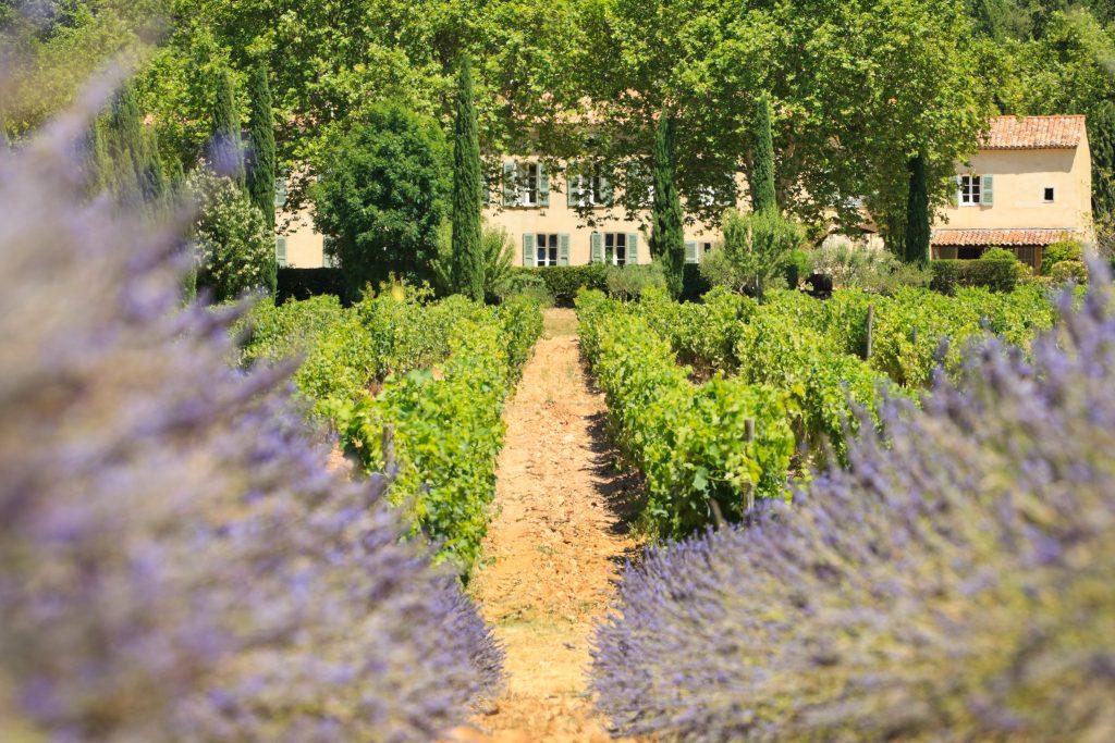 Visit Provence vineyard