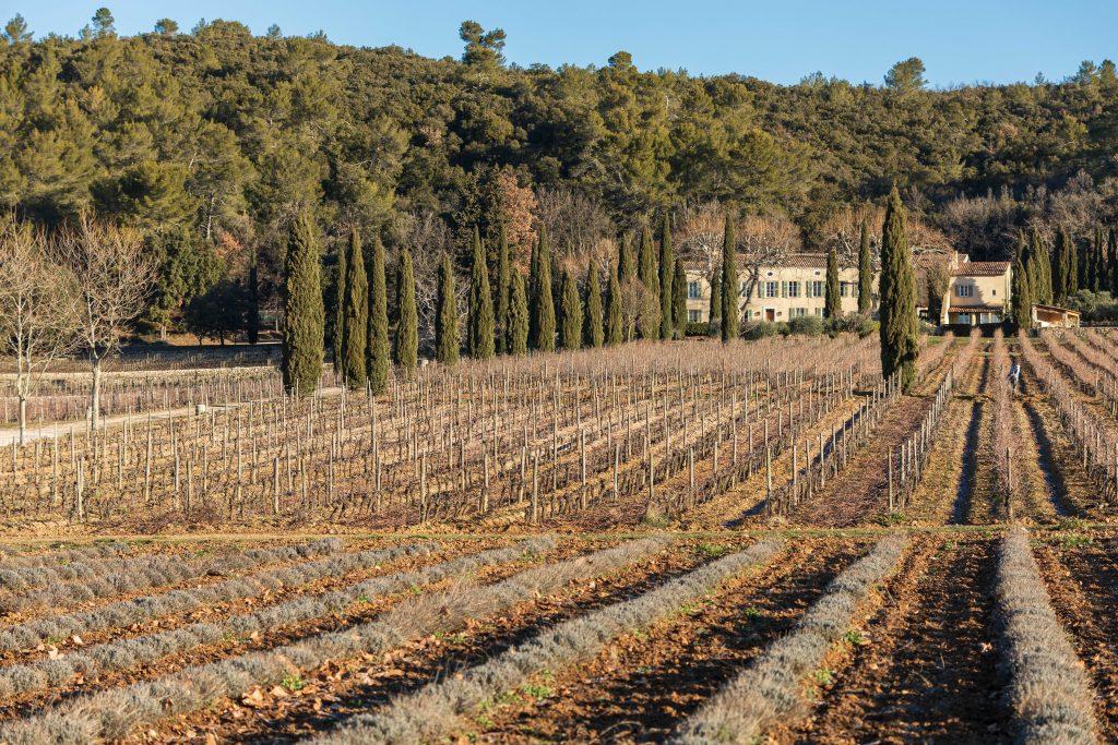 Goûtez nos vins et découvrez quel est le meilleur vin blanc